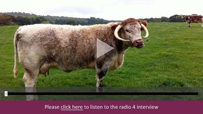 Blackbrook Longhorns radio 4 interview banner