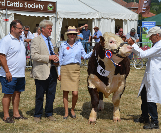 34th National Show of Hereford Cattle at Tenbury Wells