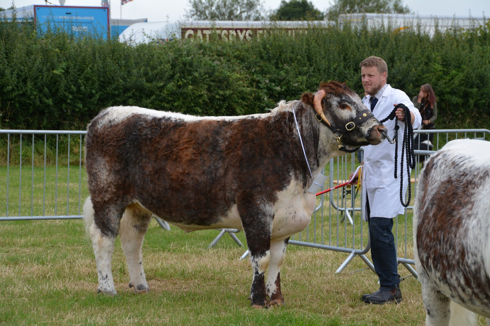 Blackbrook Bluebell Ashby Show 2019 1st Senior Heifer