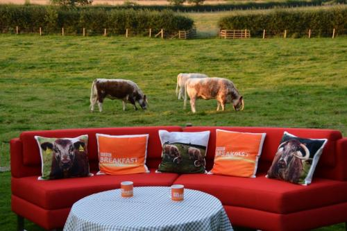 BBC Breakfast Hosted At Blackbrook Longhorns