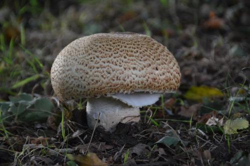 Fungi, Garden Finds