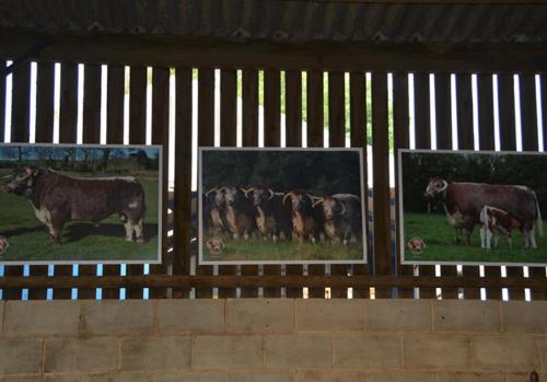 Three Photos on Wall