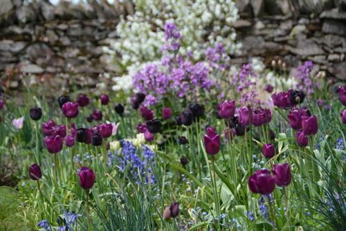 Blackbrook garden and springbarrow